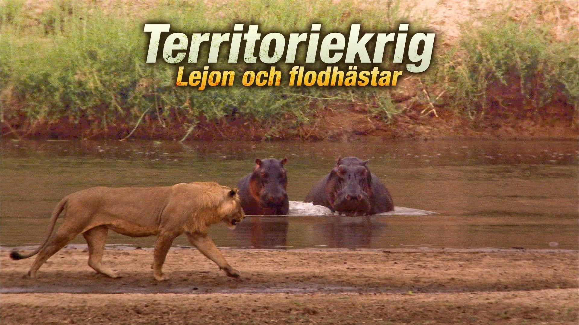 Territoriekrig: Lejon och flodhästar