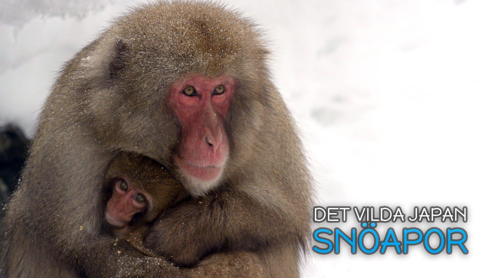 Det vilda Japan: Snöapor