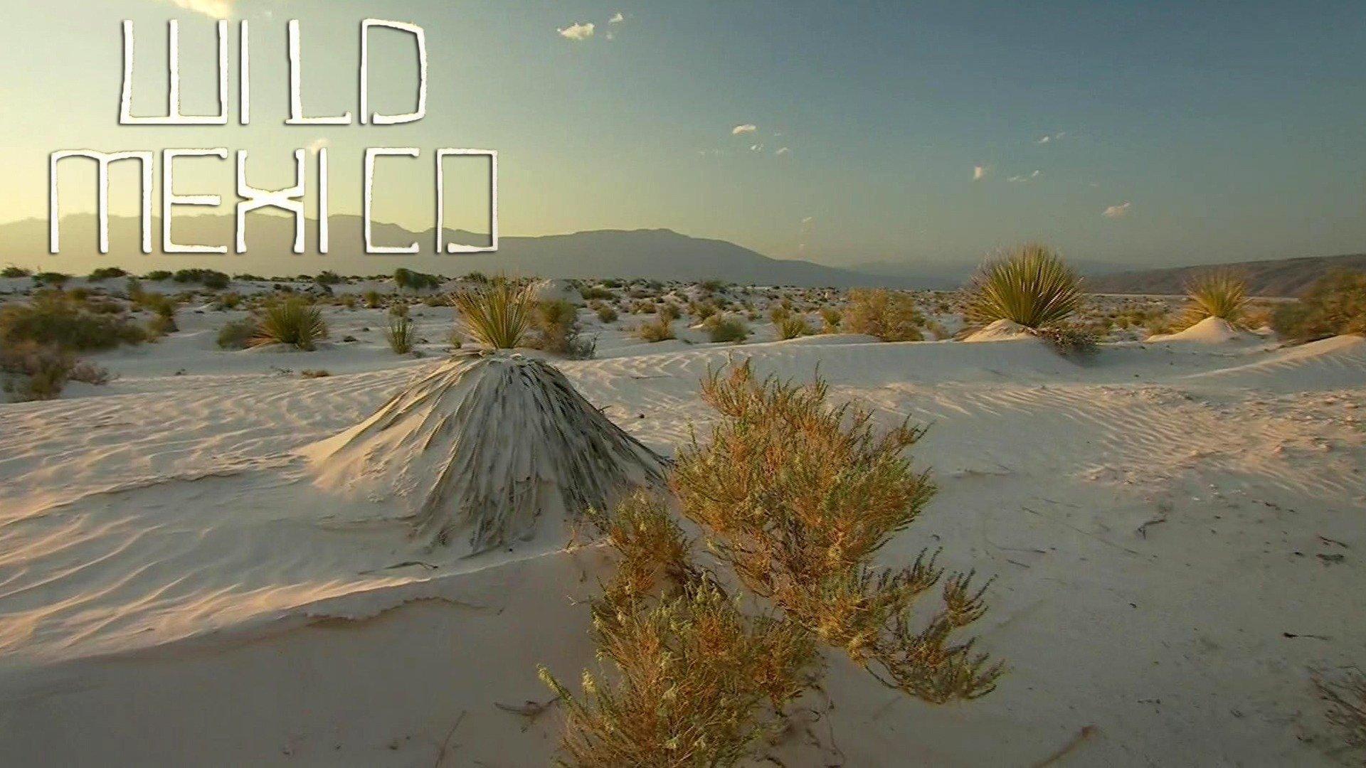 Wild Mexico