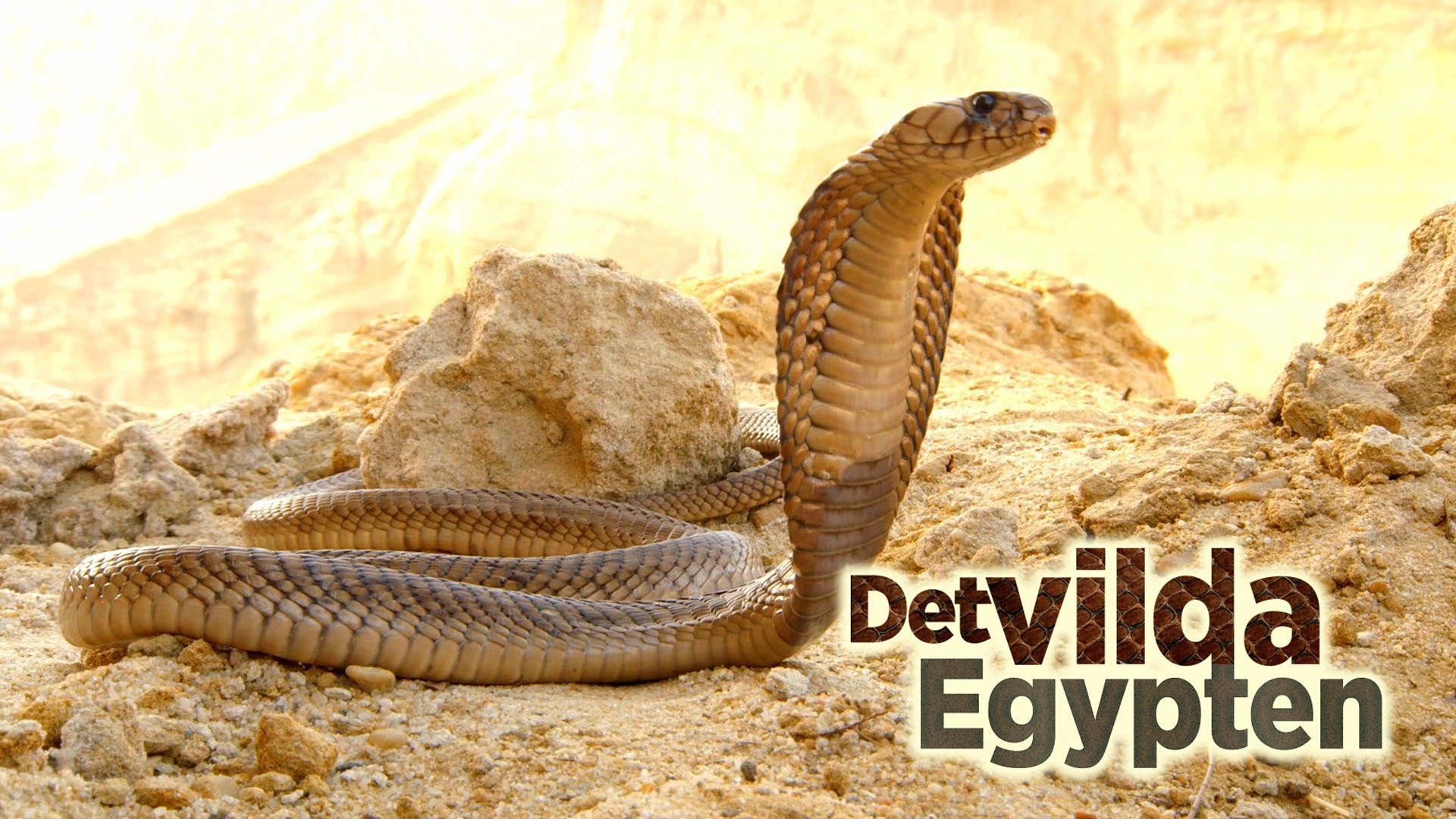 Det vilda Egypten
