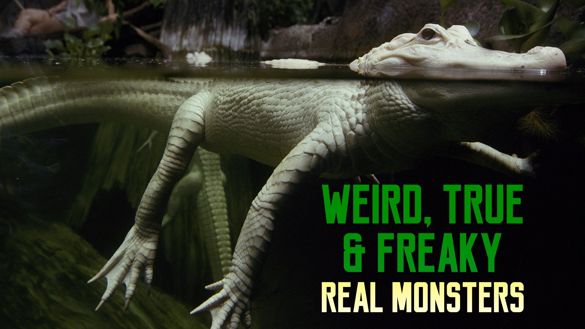 Weird, True & Freaky: Real Monsters