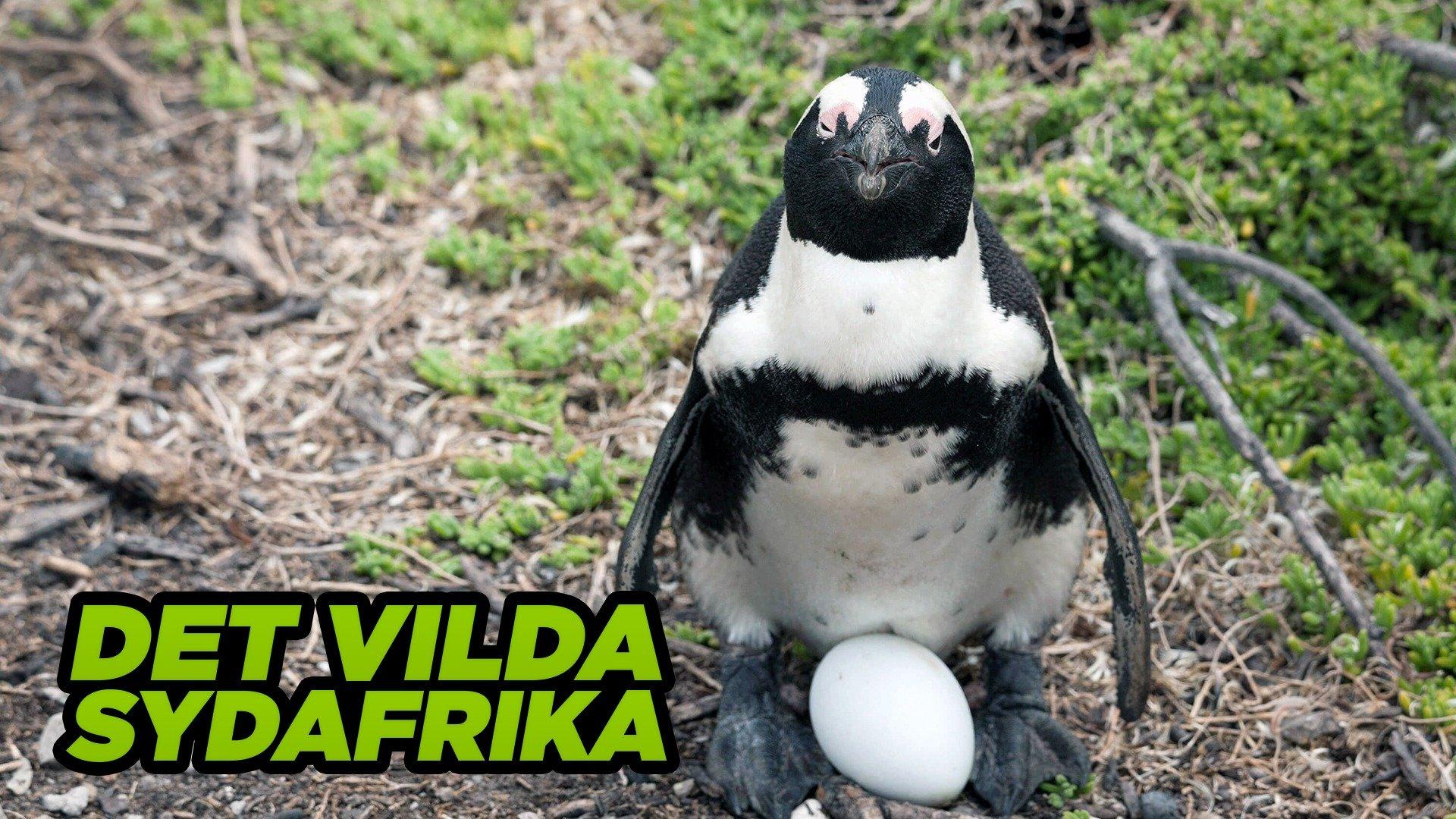 Det vilda Sydafrika