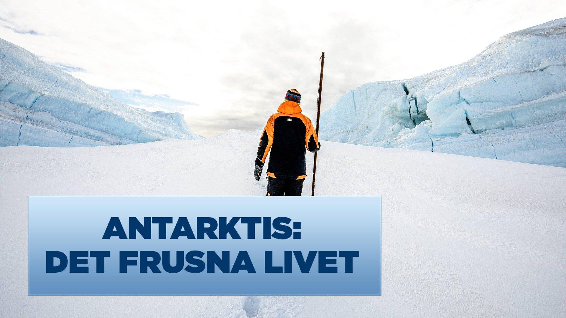 Antarktis: det frusna livet