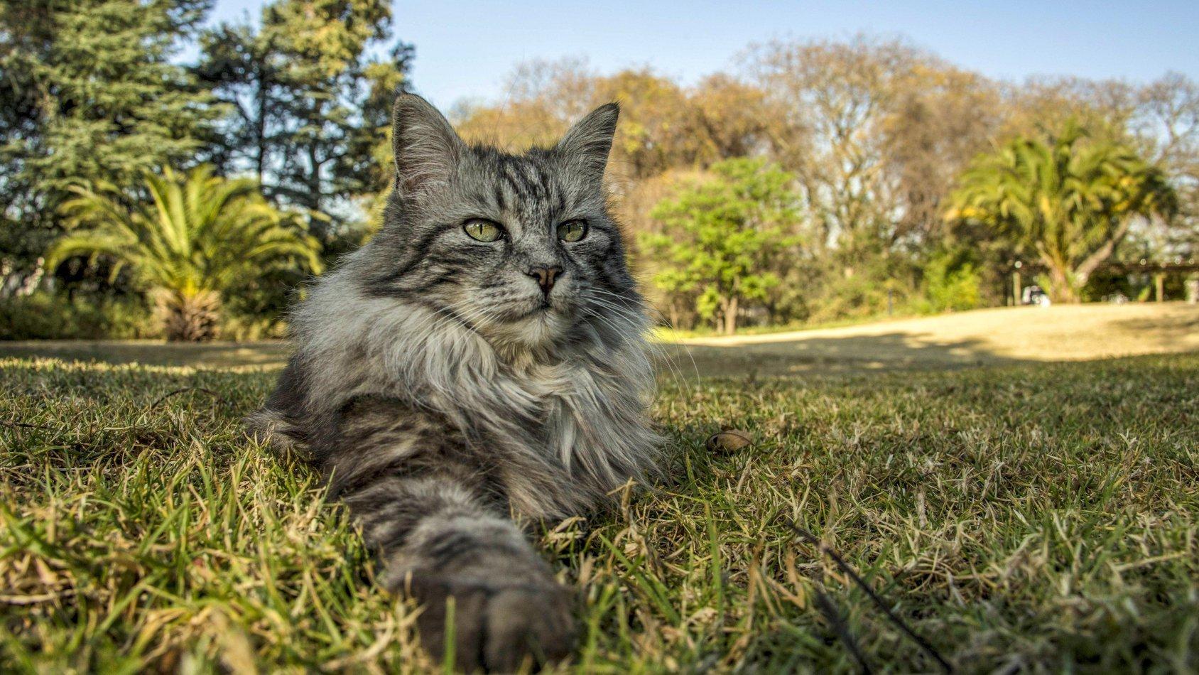 Kattens själ