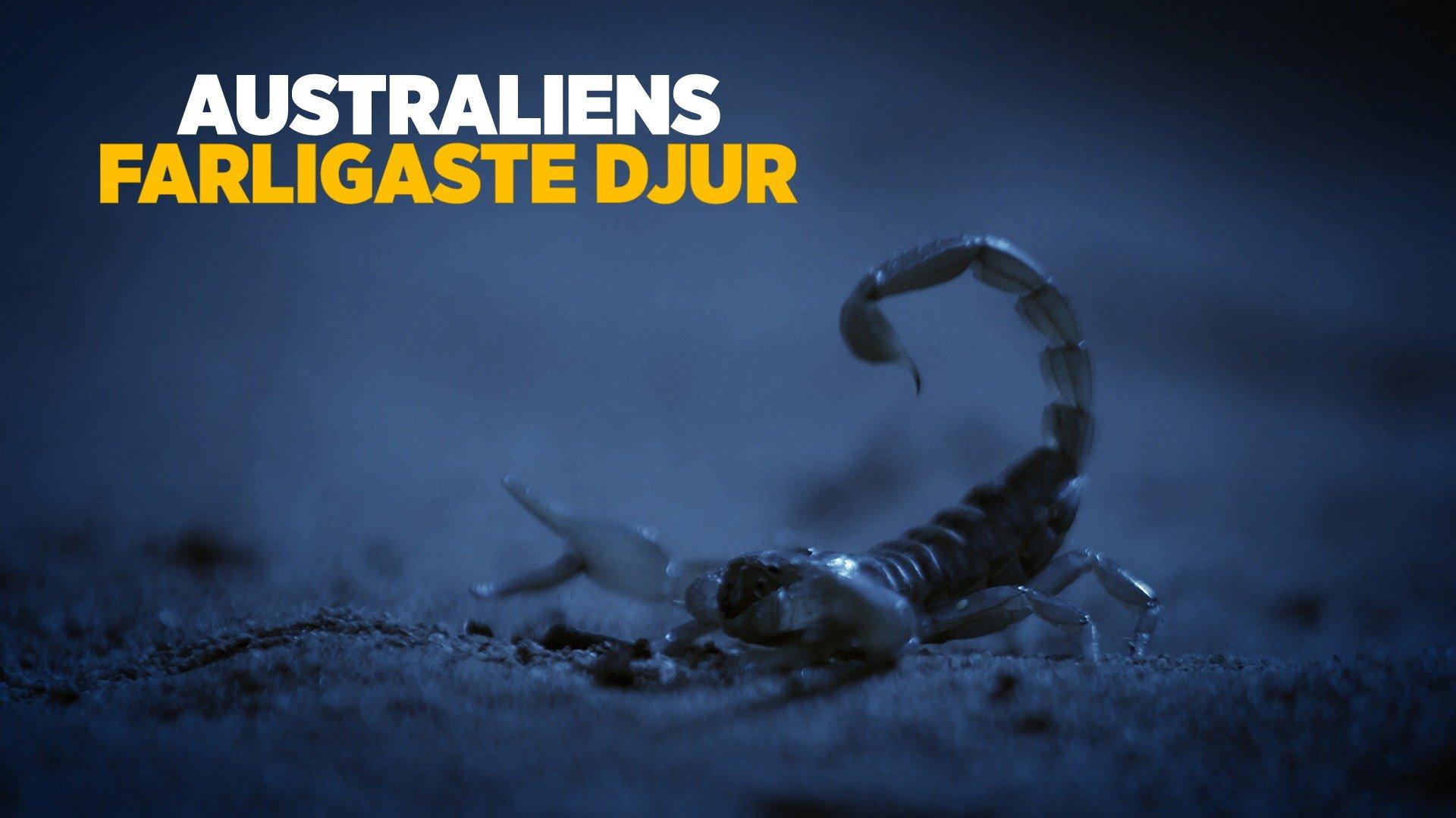 Australiens farligaste djur