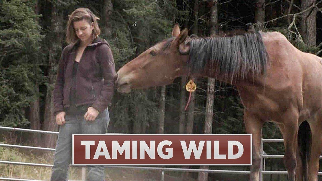 Taming Wild