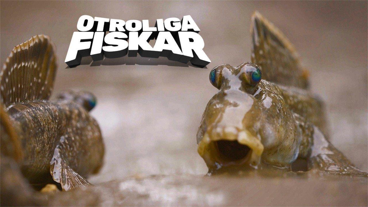 Otroliga fiskar