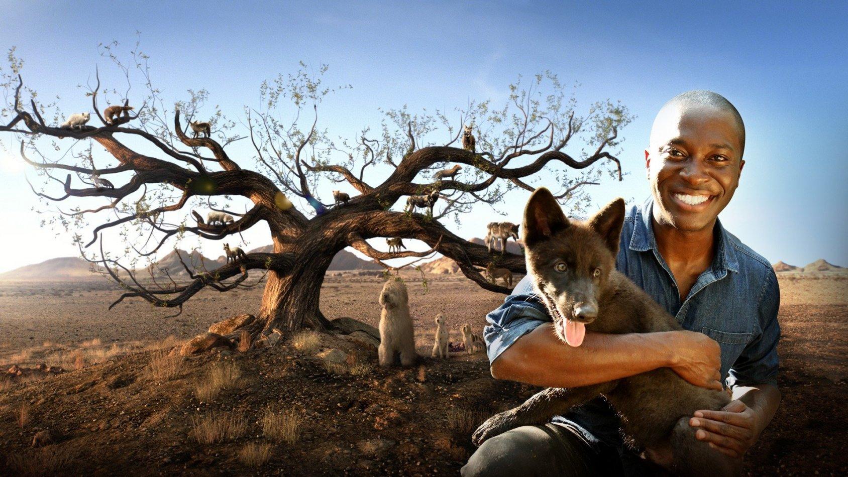 Hundar: en otrolig djurfamilj