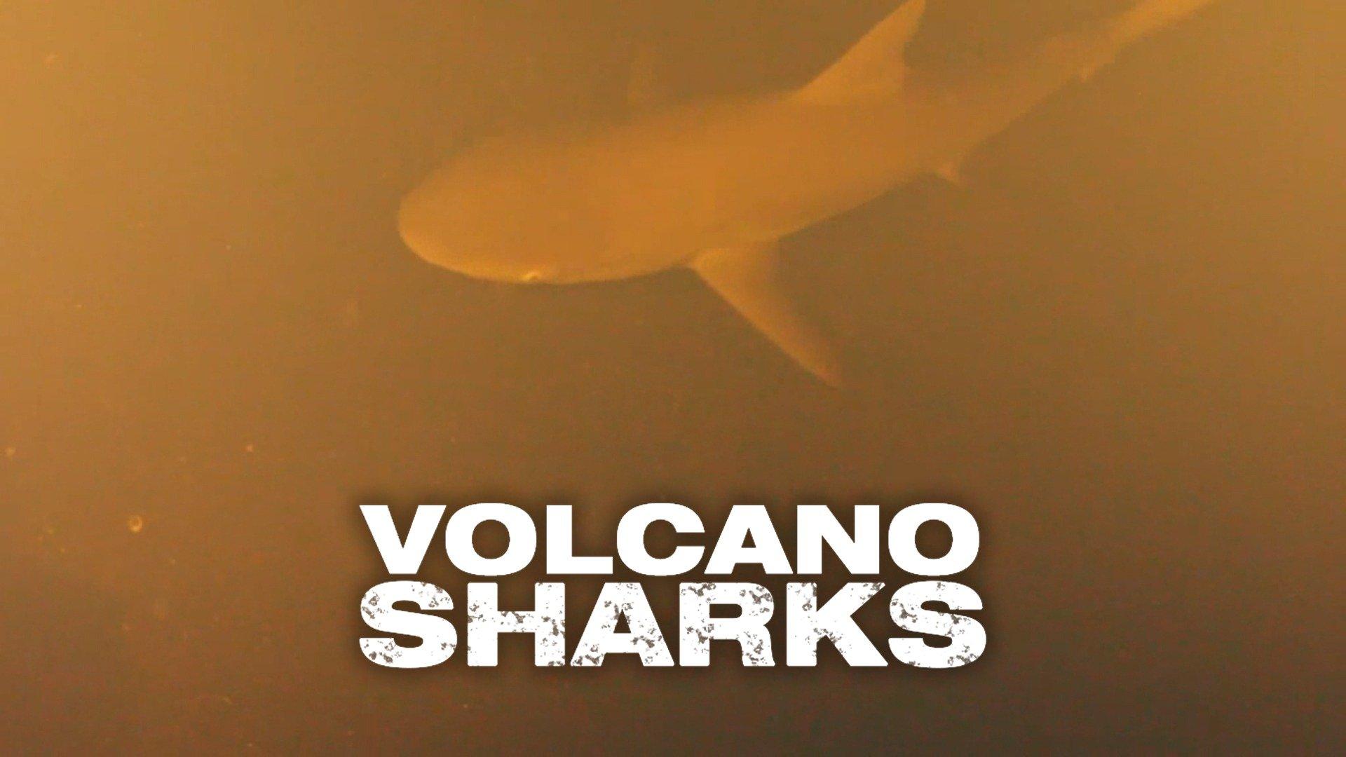Volcano Sharks