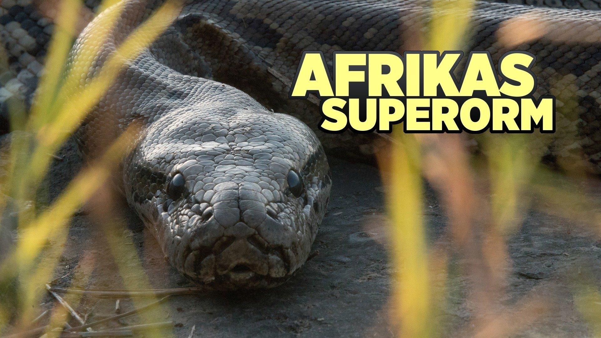 Afrikas superorm