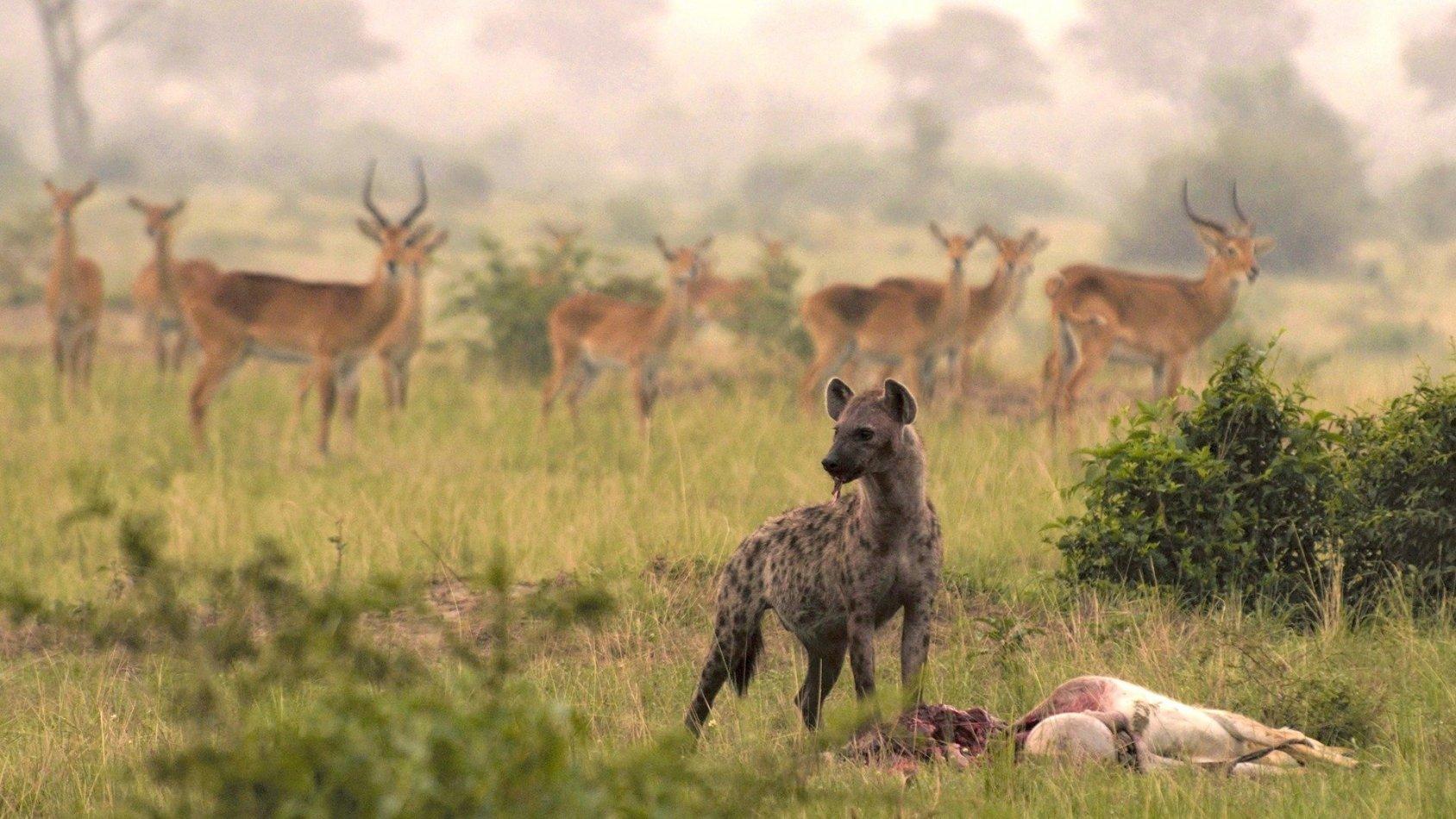 Det vilda Uganda
