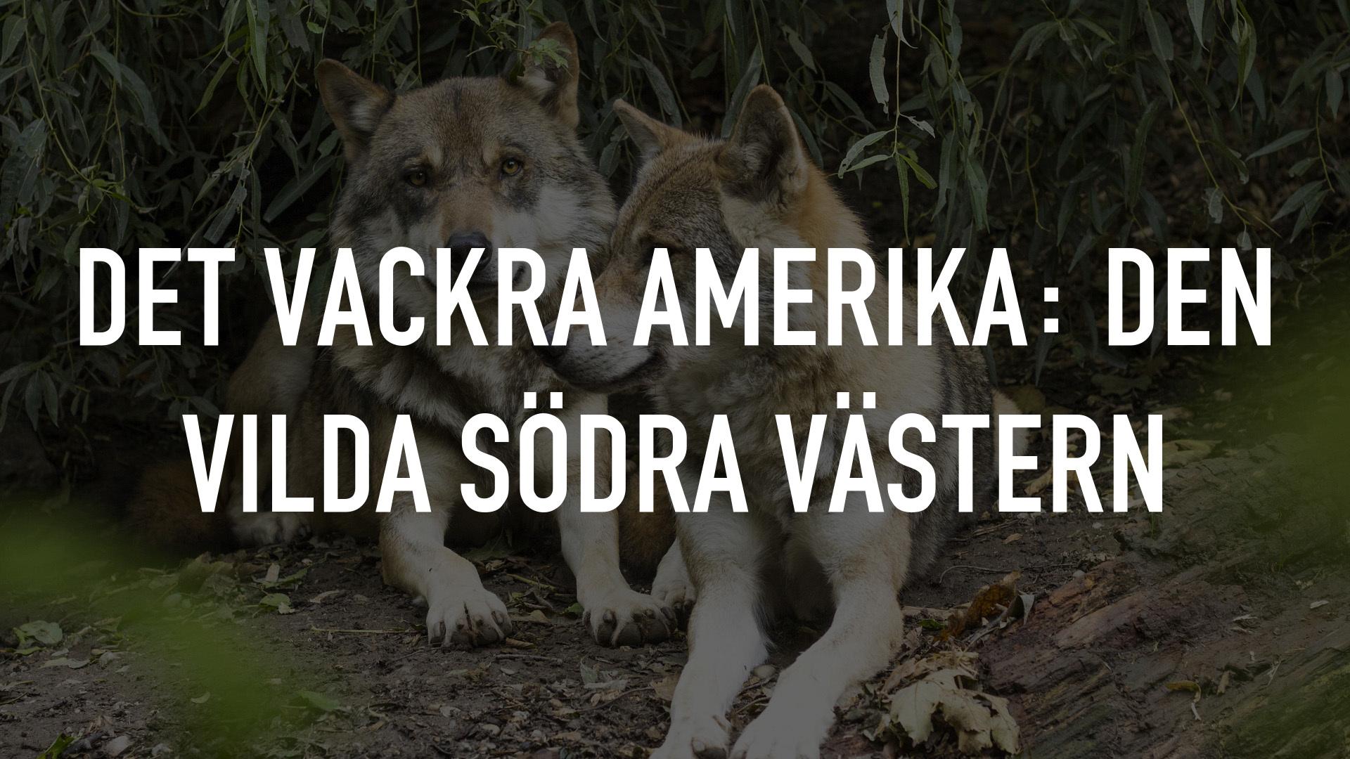 Det vackra Amerika: Den vilda södra Västern