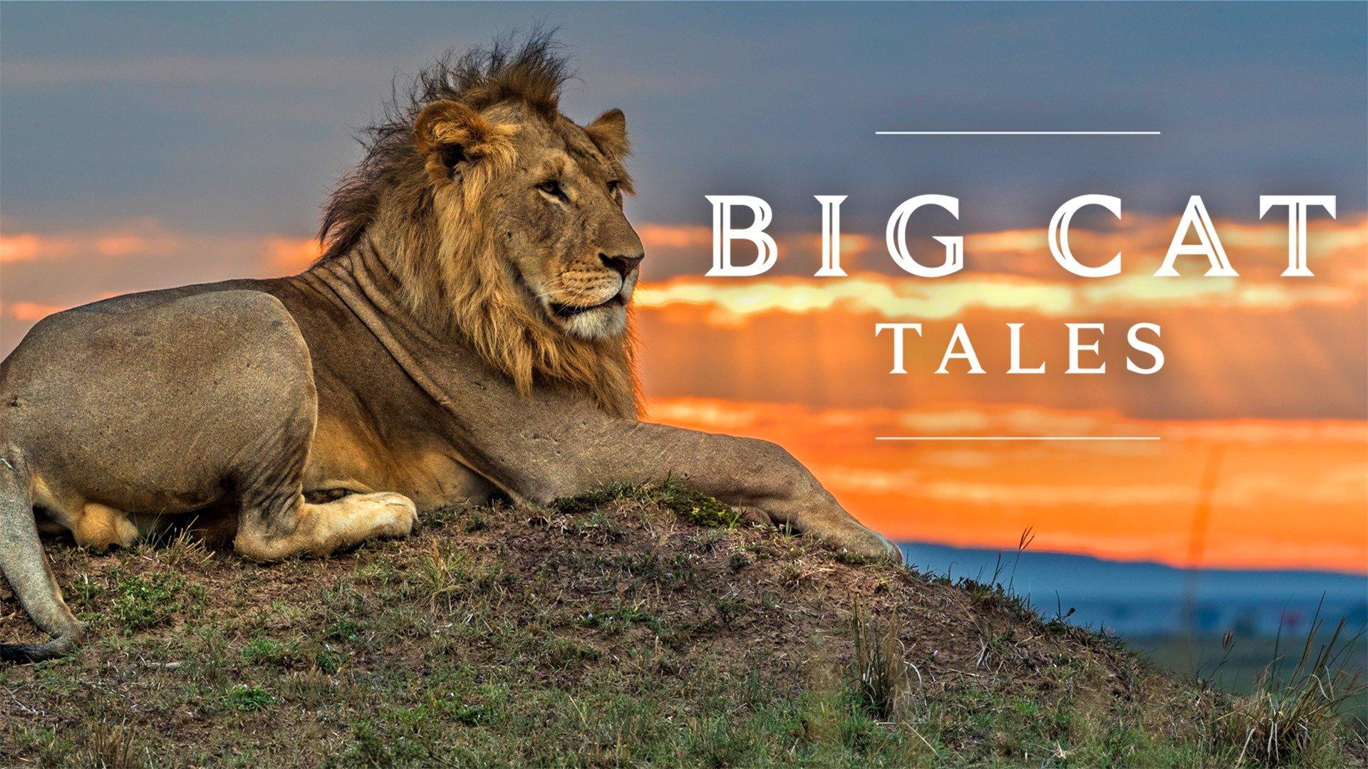 Big Cat Tales
