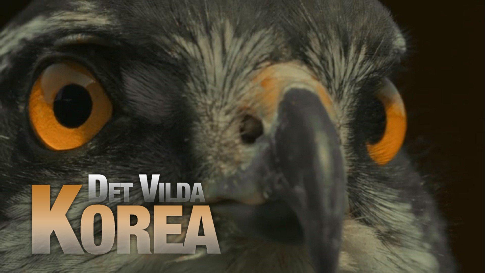 Det vilda Korea