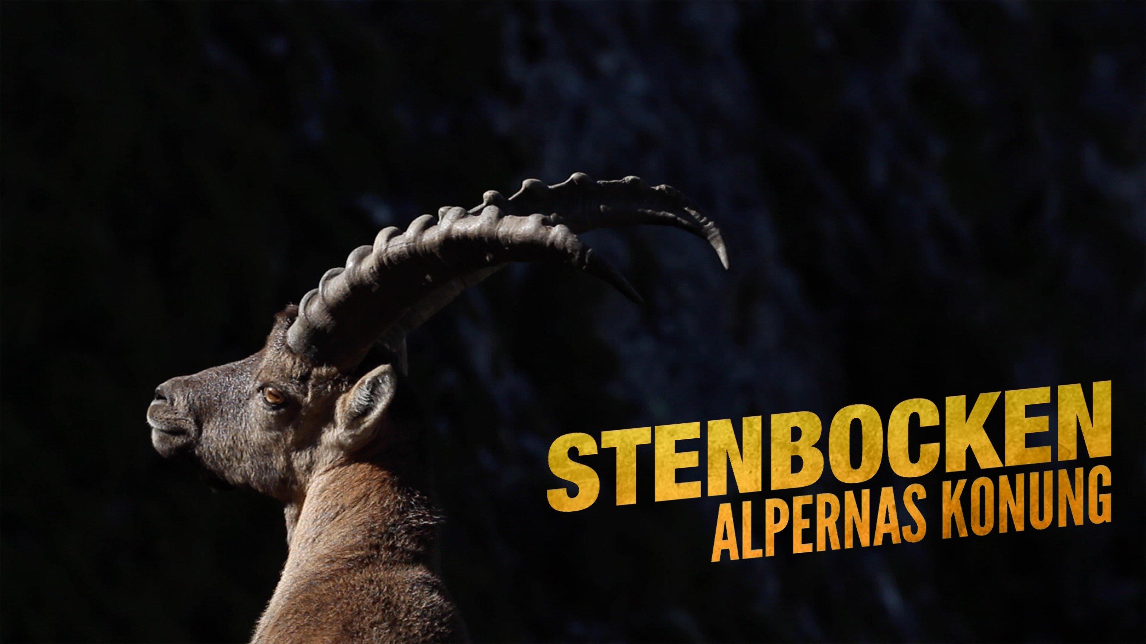 Stenbocken - Alpernas konung