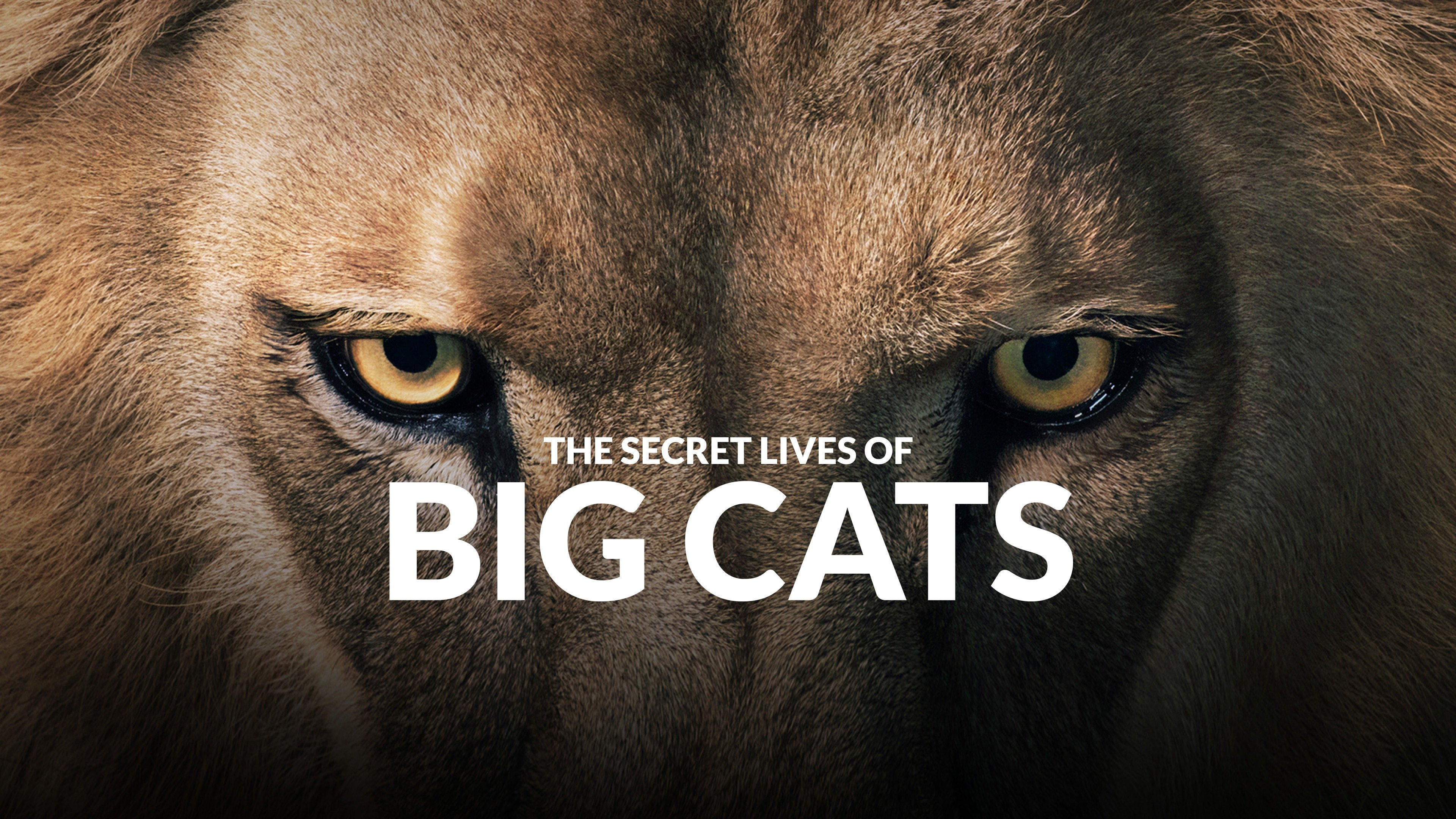 The Secret Lives of Big Cats