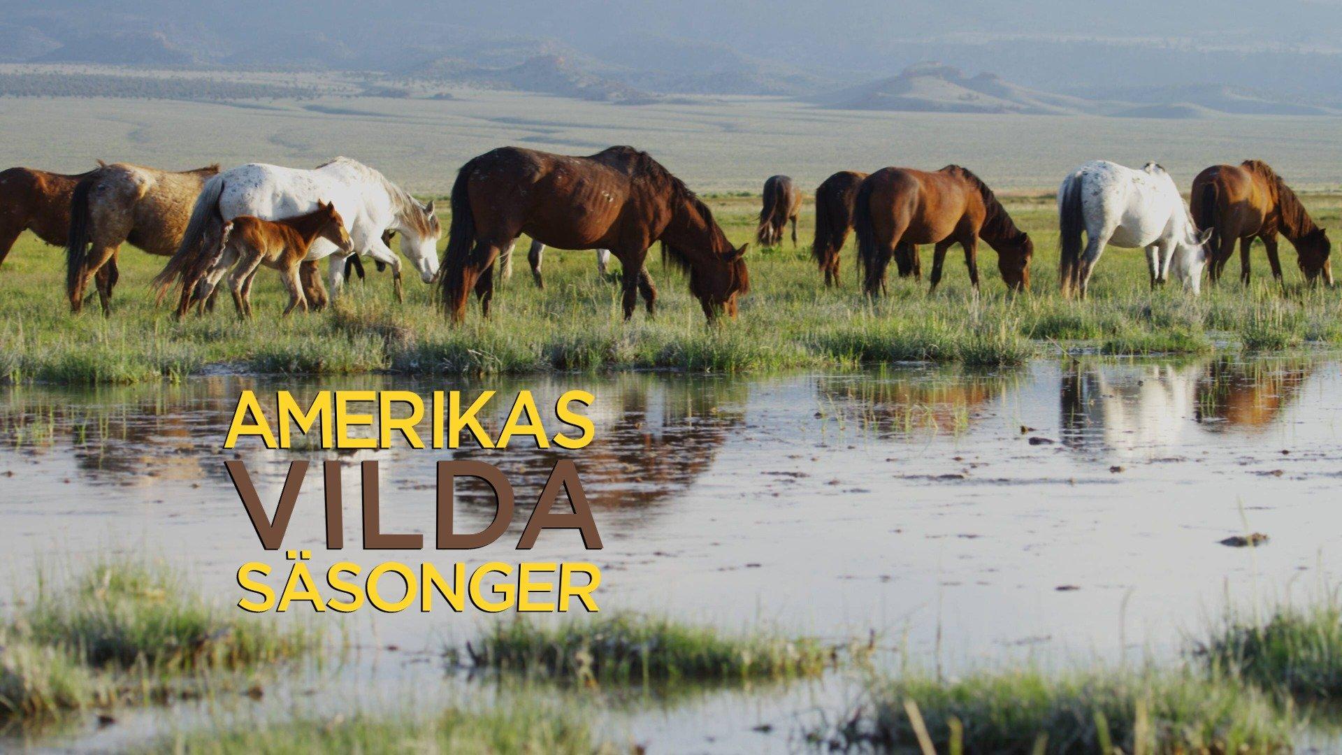 Amerikas vilda säsonger