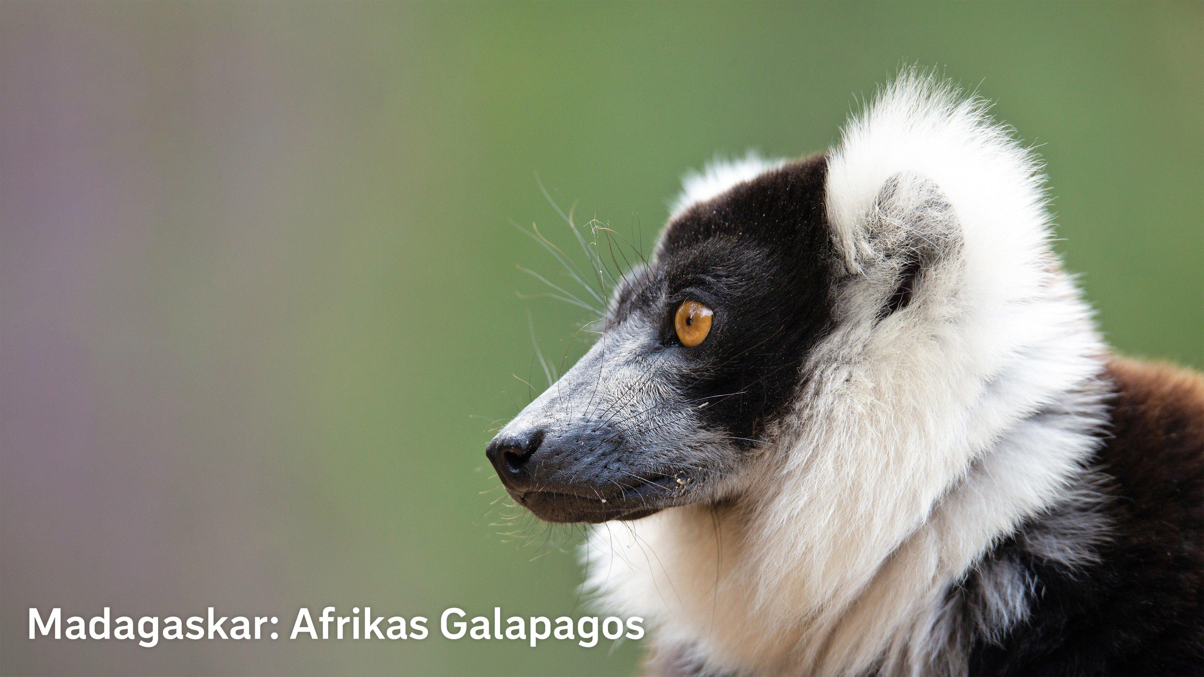 Madagaskar: Afrikas Galapagos