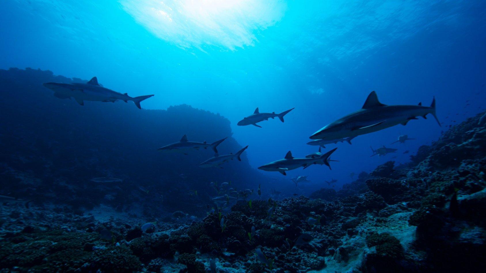 Dolphins vs Sharks: Blood Battle