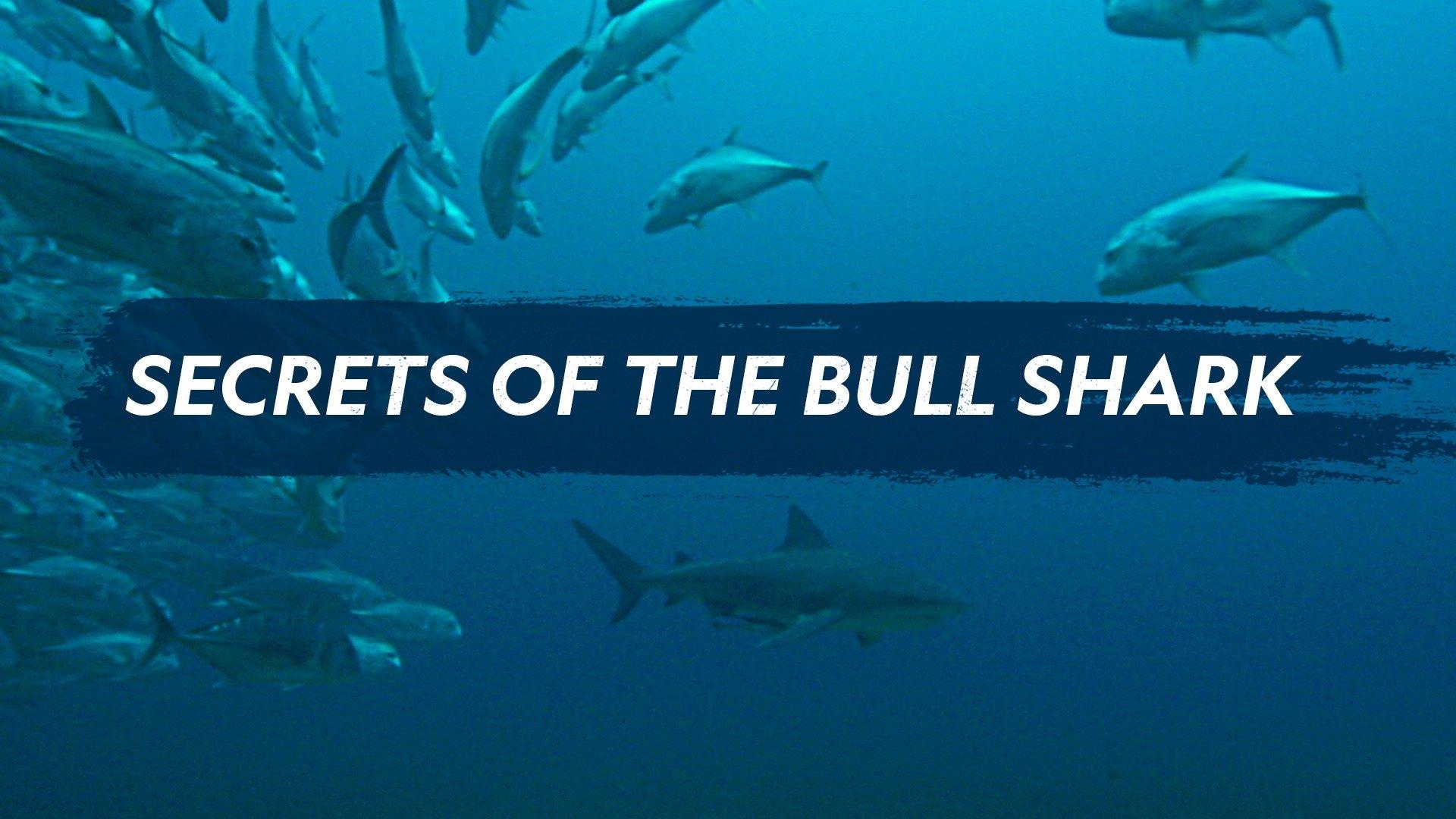 Secrets of the Bull Shark