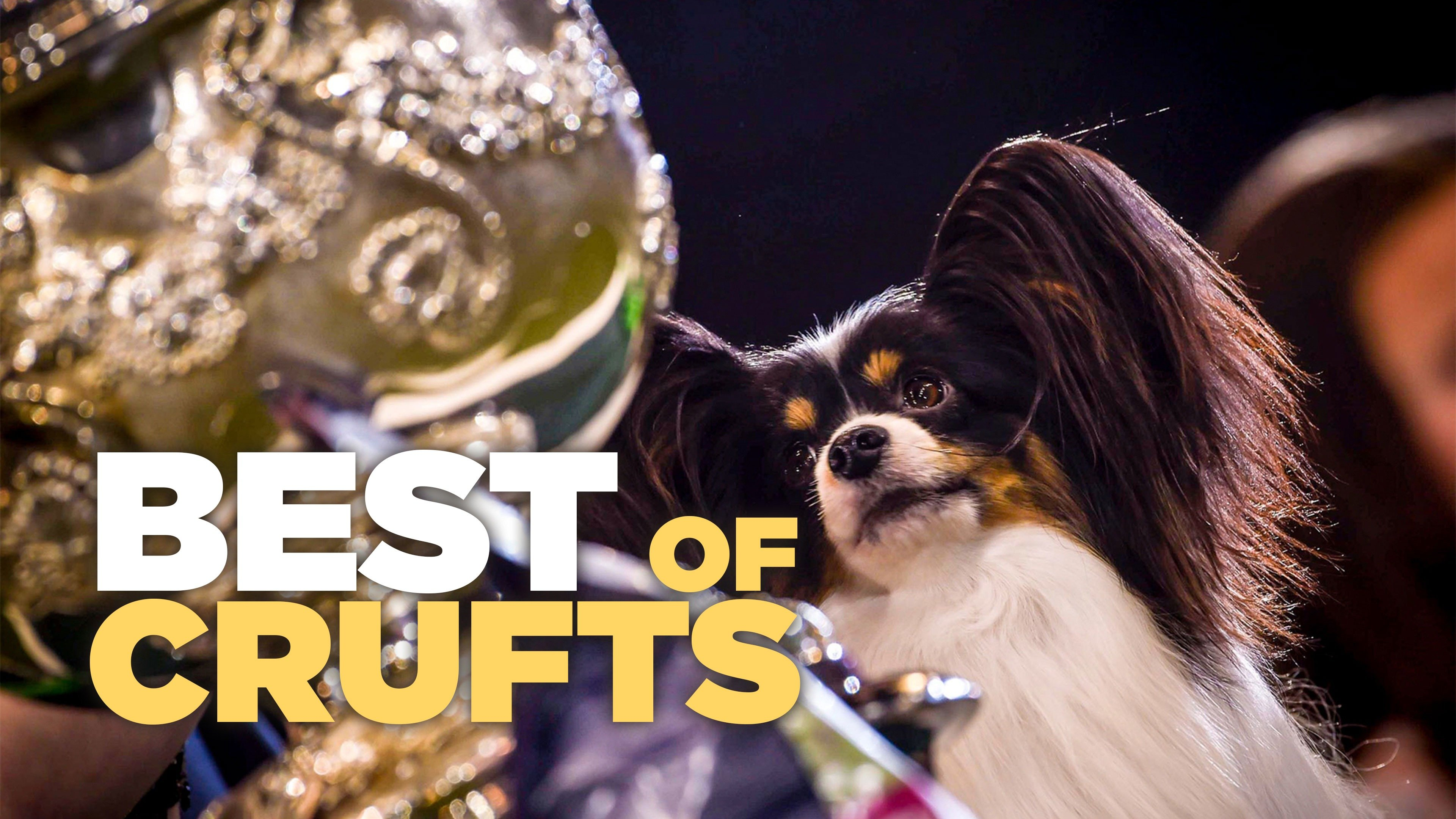 Best of Crufts