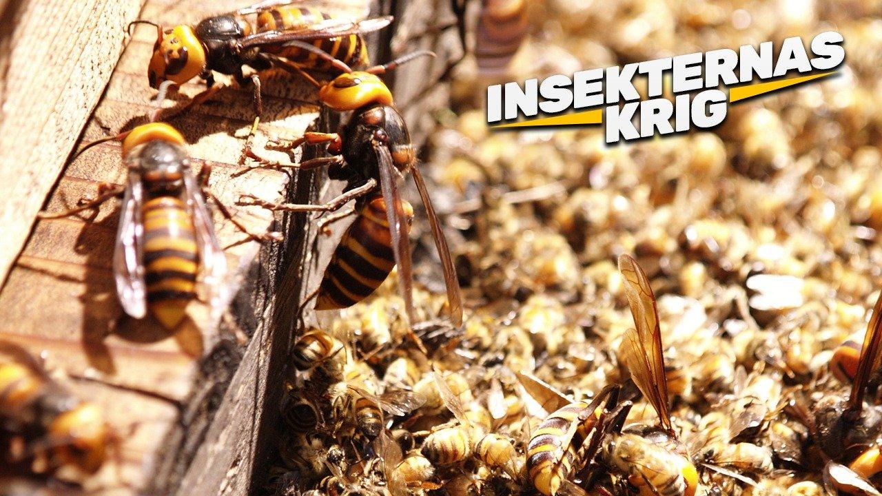 Insekternas krig