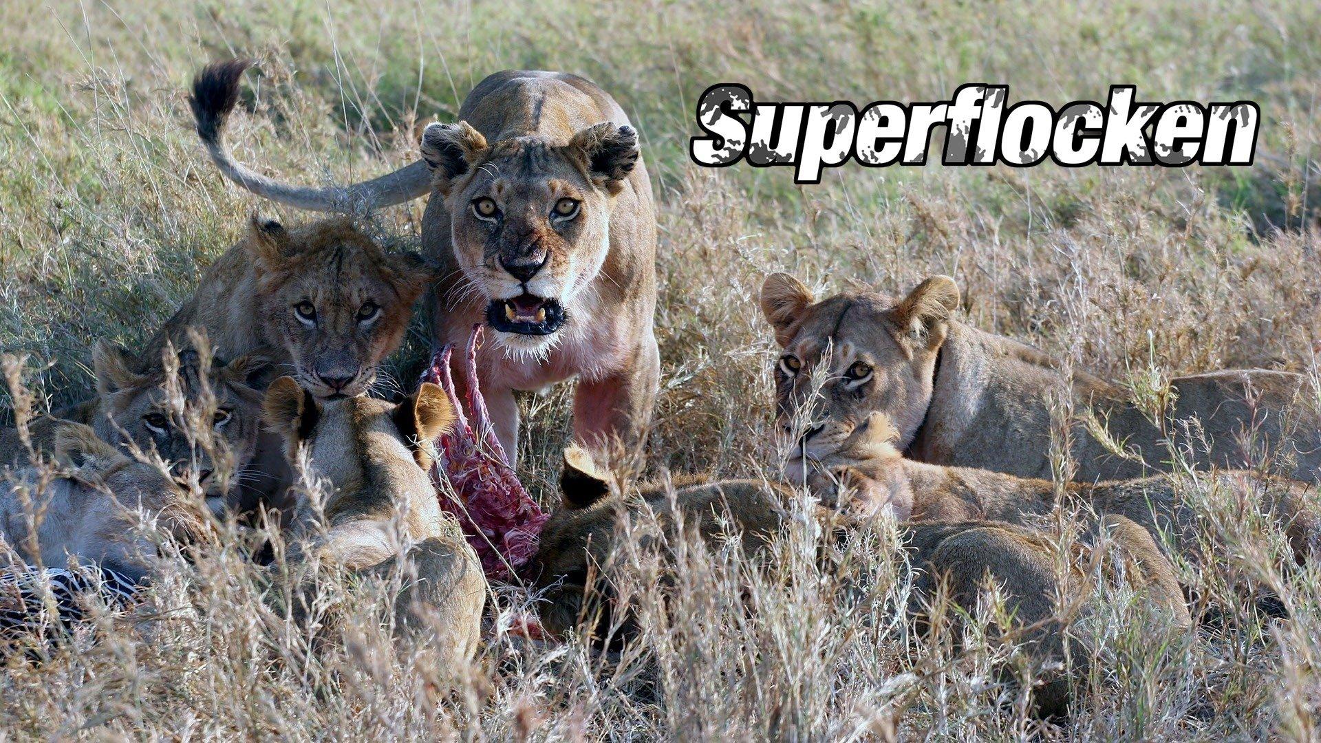 Superflocken