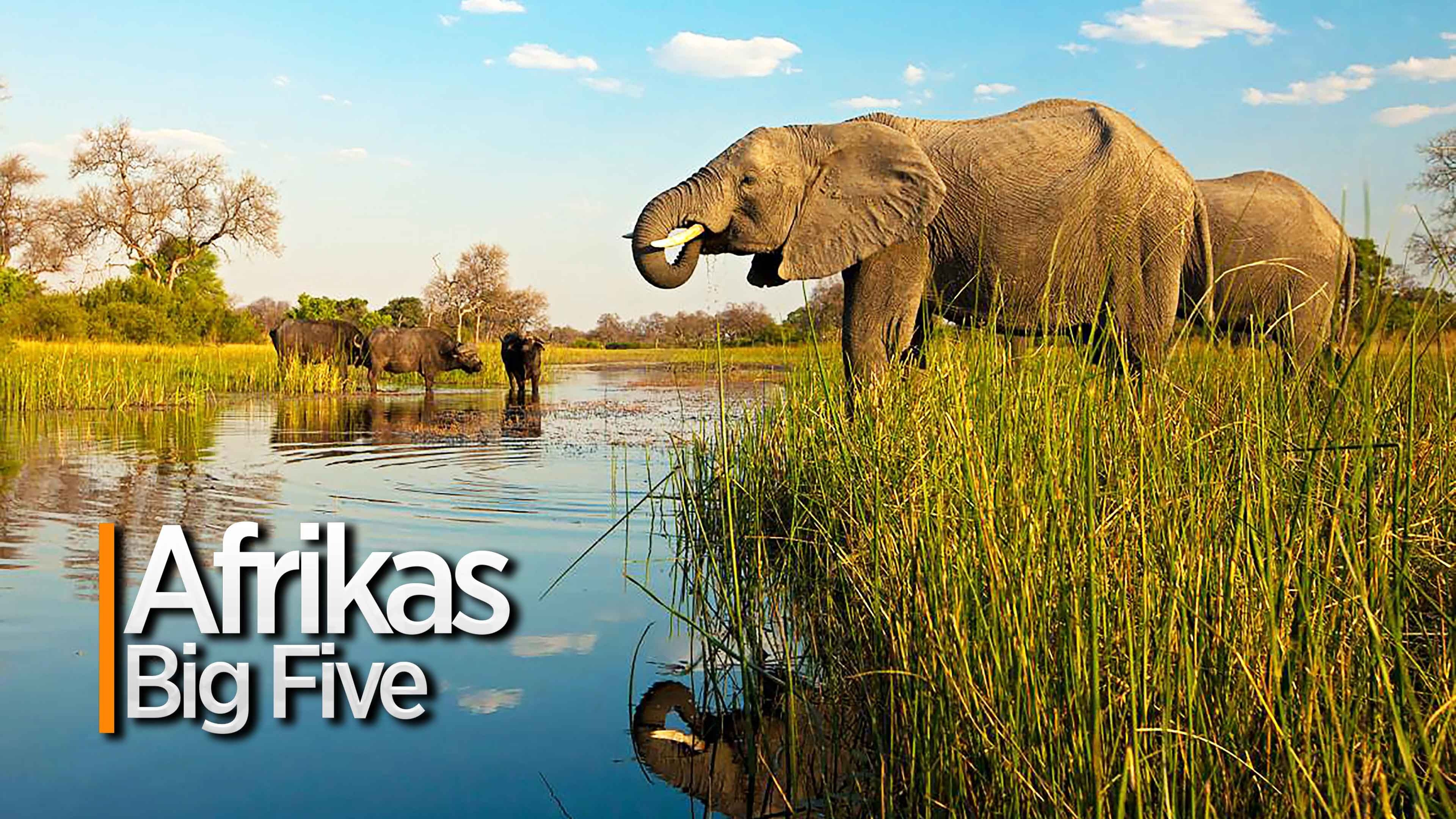 Afrikas Big Five