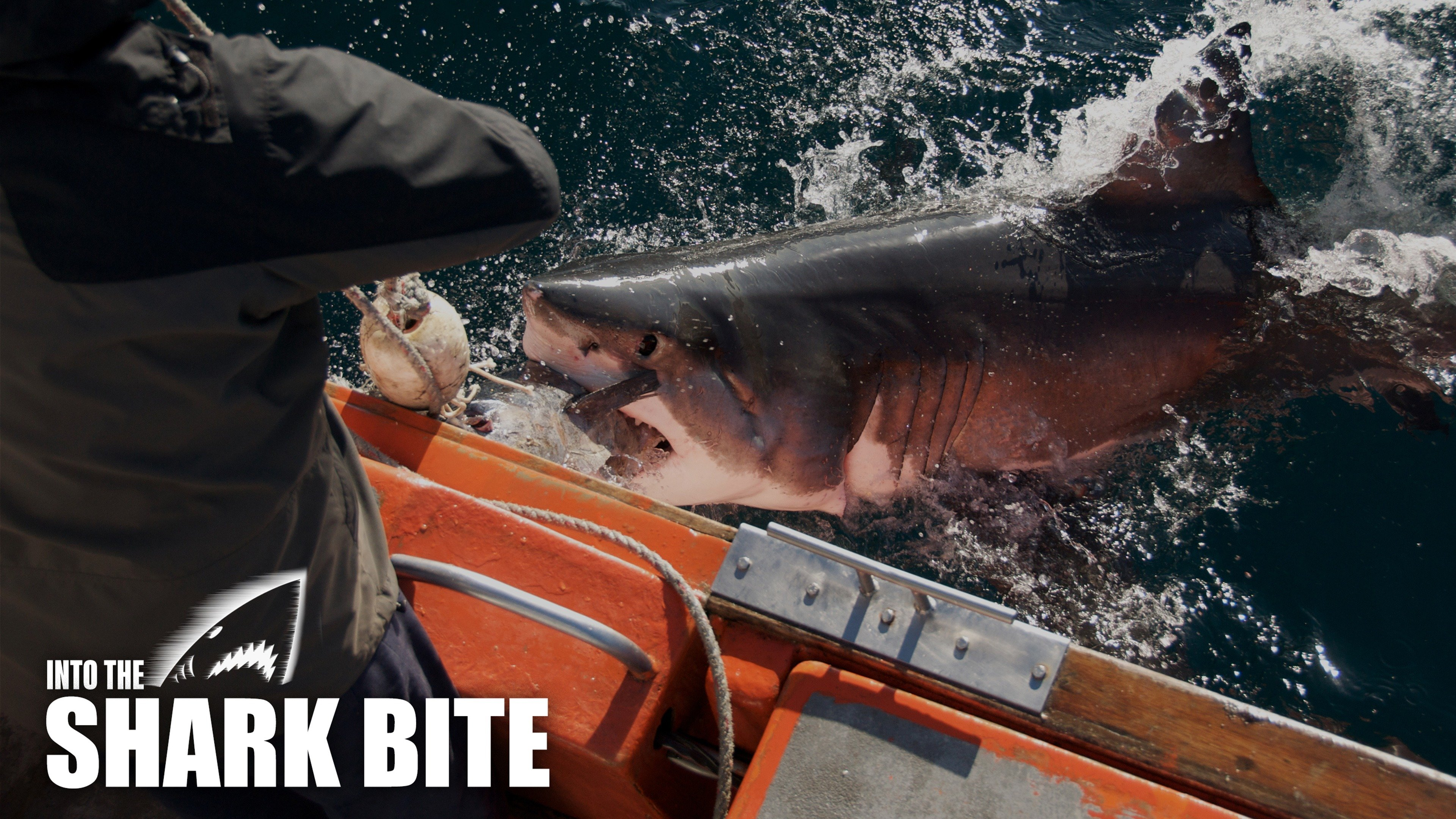 Into the Shark Bite