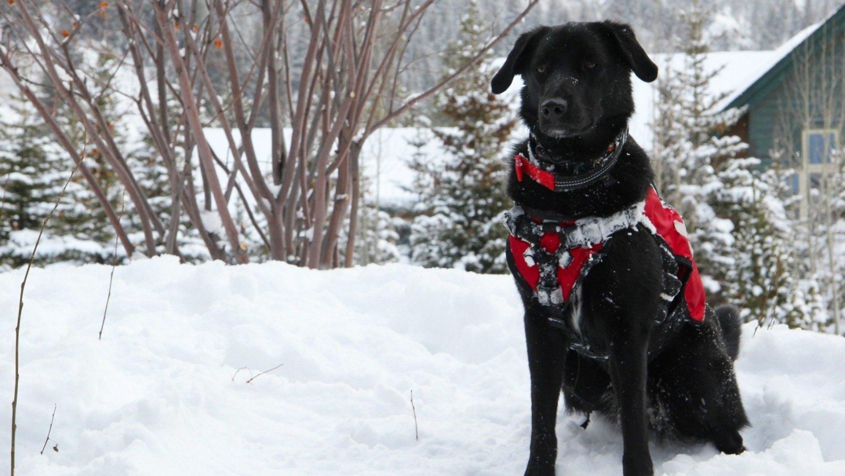 Hunden som räddade julen