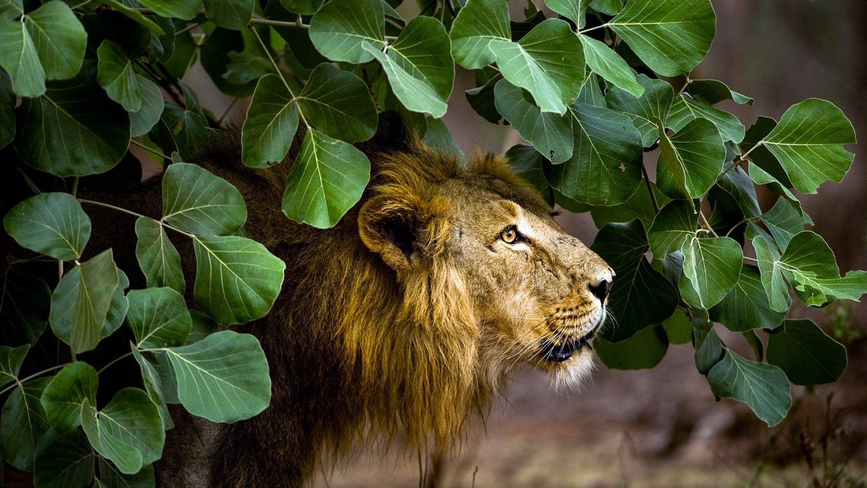 Indiens hemliga djurvärld
