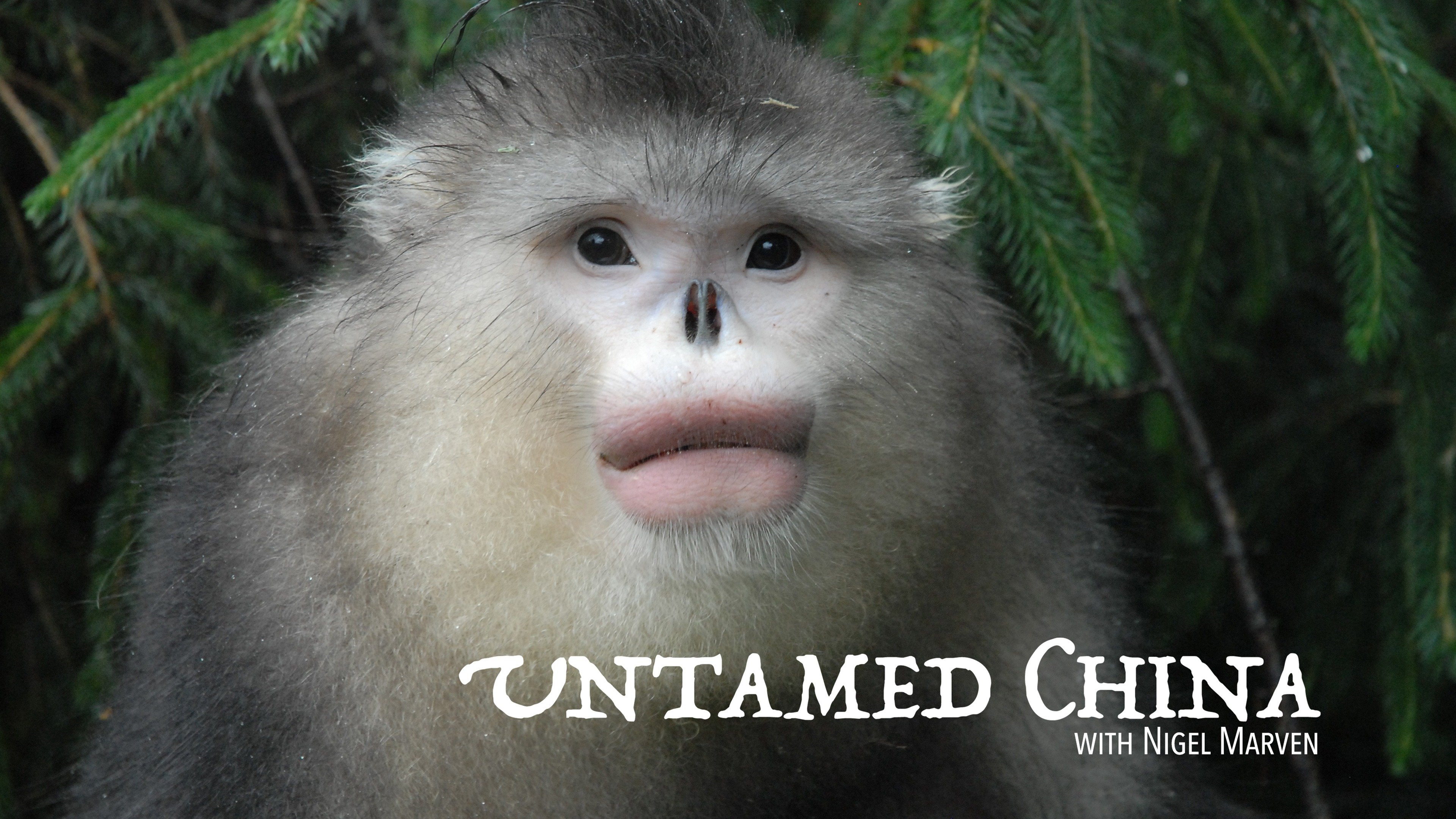 Untamed China with Nigel Marven