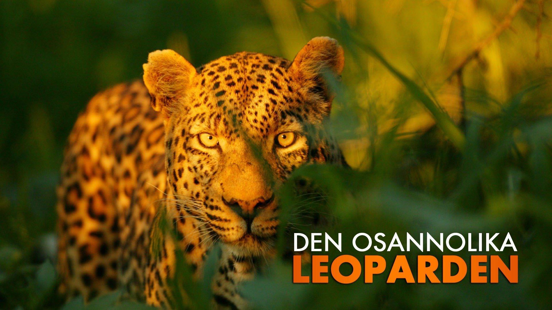 Den osannolika leoparden