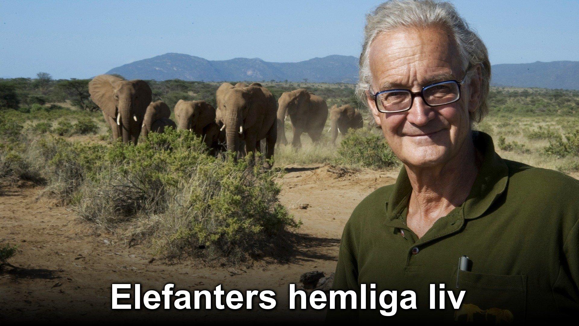 Elefanters hemliga liv