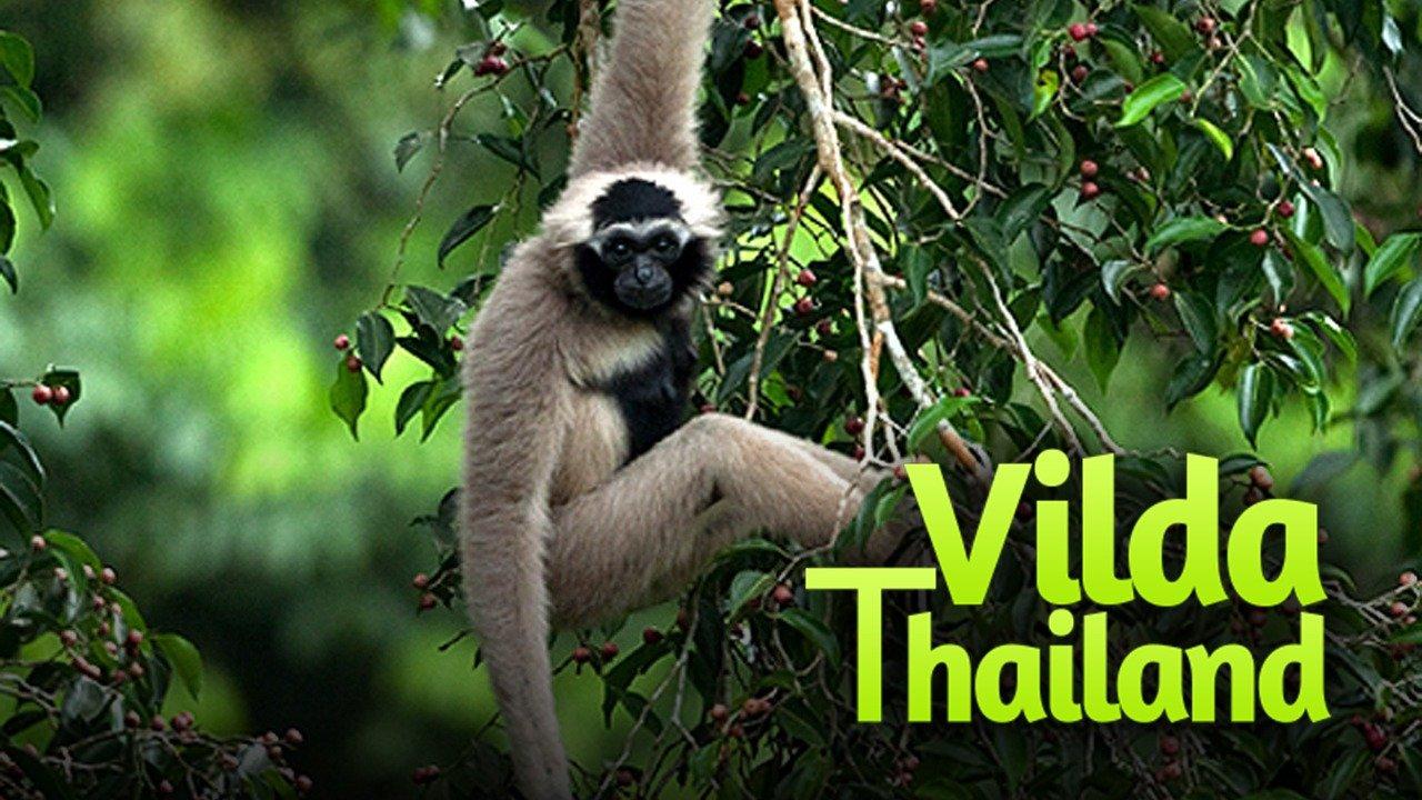 Vilda Thailand